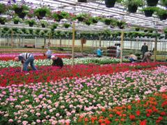 Vrijwilligers bloemenactie